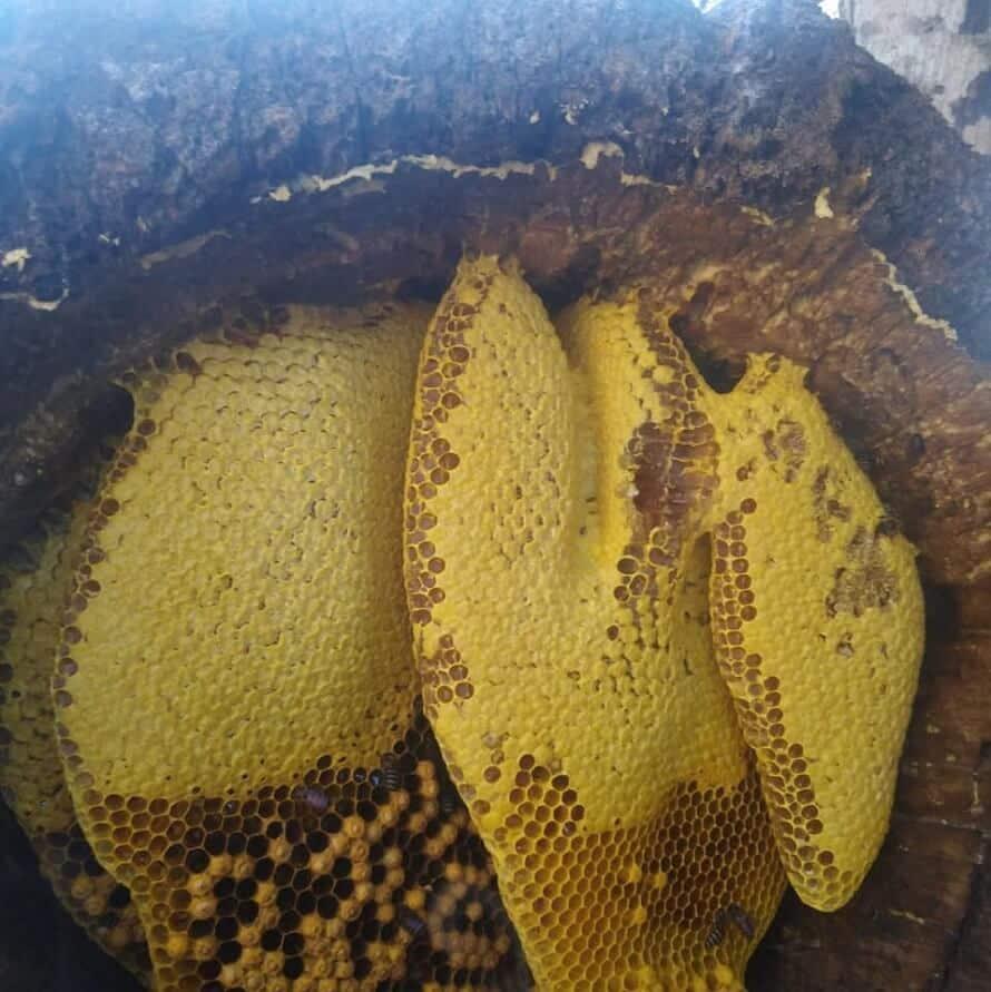 Mật ong rừng Gia Lai nguyên chất, thơm, ngon, bổ dưỡng - Siêu phẩm của núi rừng Tây Nguyên